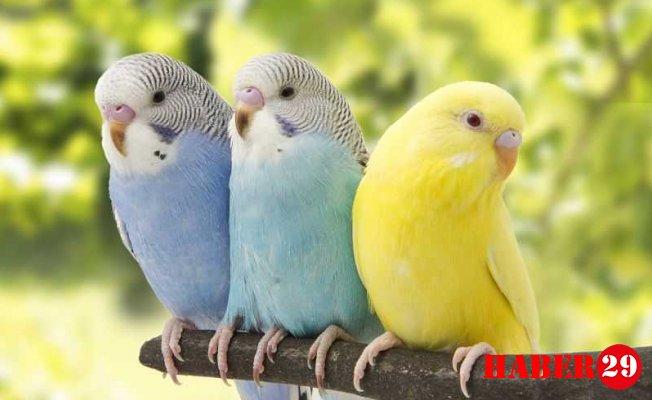 En Sevimli Muhabbet Kuşu İsimleri