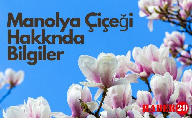 Manolya Çiçeği Hakknda Bilgiler