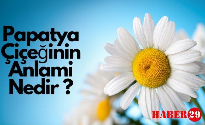 Papatya Çiçeğinin Anlamı Nedir?