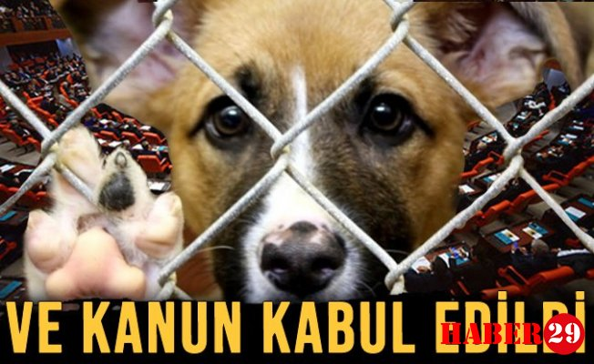 Hayvanları Koruma Kanunu Kabul Edildi