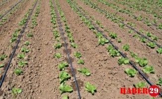 Bakan Pakdemirli: Tarımsal kuraklığa karşı en güçlü silah damla sulama